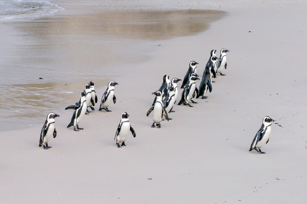 penguin-1719608_1280